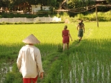 crossing-the-rice-fields