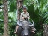 kid-riding-buffalo